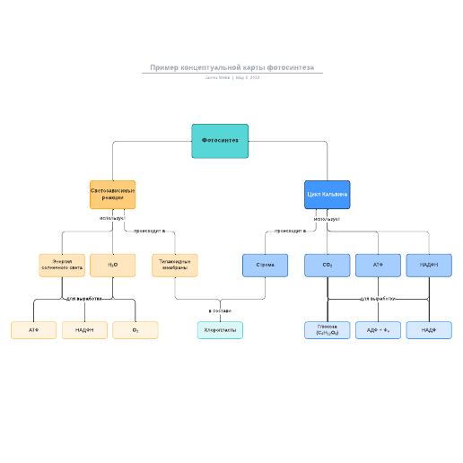 Пример концептуальной карты фотосинтеза