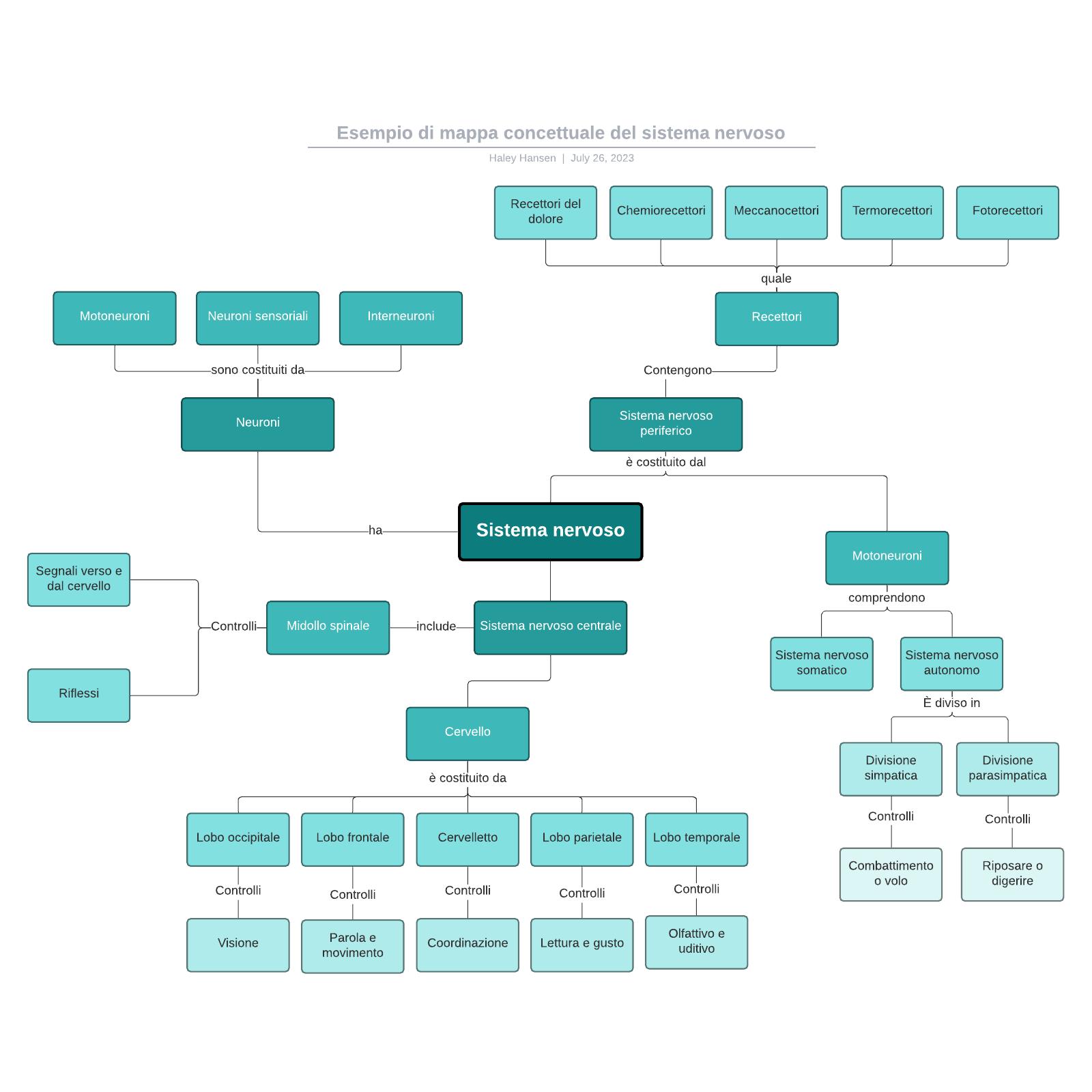 Esempio di mappa concettuale del sistema nervoso
