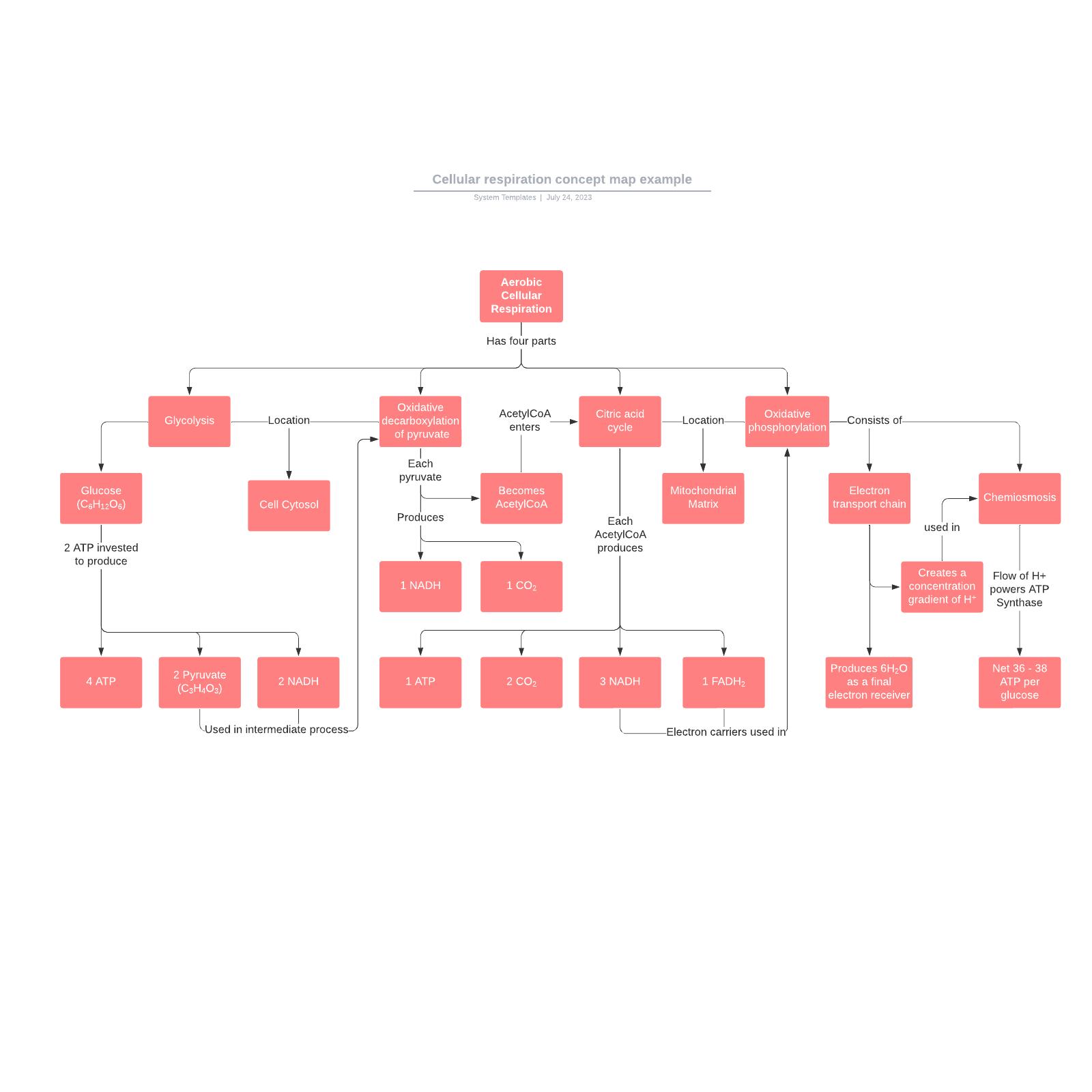 Cellular respiration concept map example
