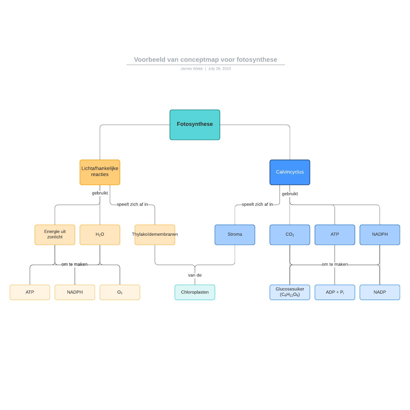 Voorbeeld van conceptmap voor fotosynthese