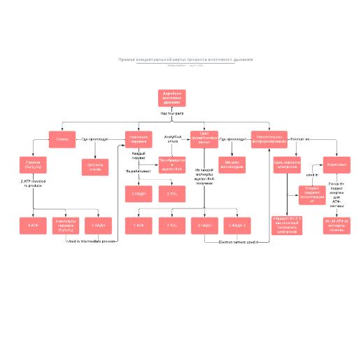 Пример концептуальной карты процесса клеточного дыхания