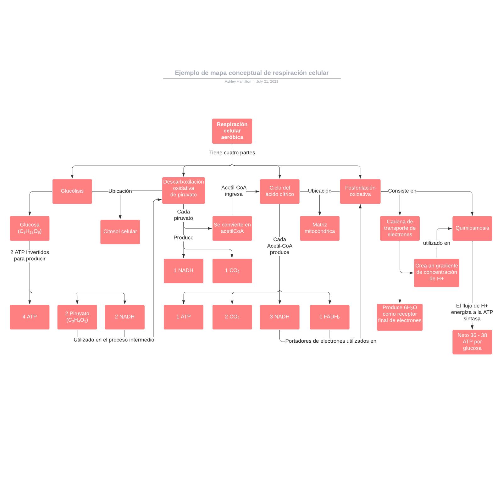 Ejemplo de mapa conceptual de respiración celular