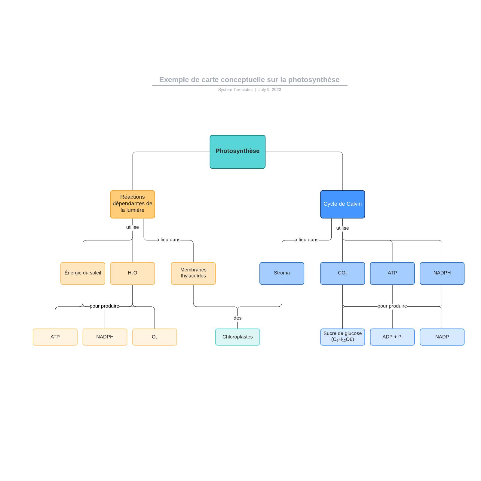 exemple de carte conceptuelle sur la photosynthèse