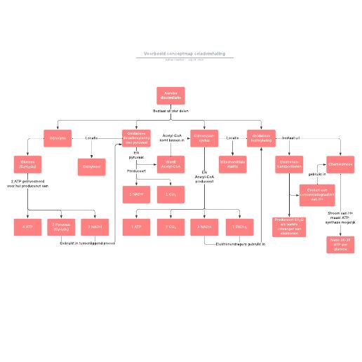 Voorbeeld conceptmap celademhaling