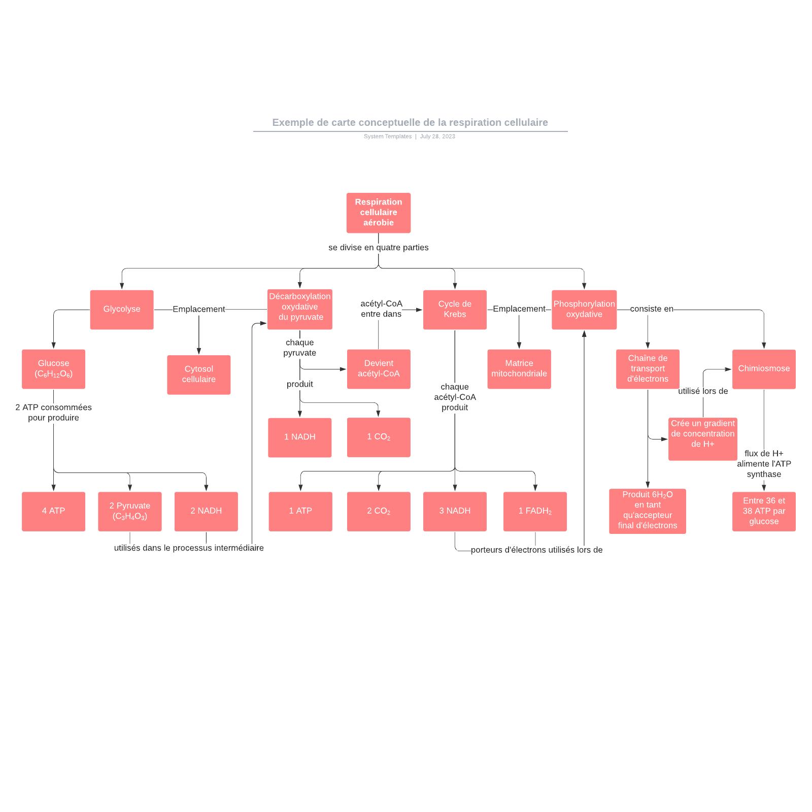 exemple de carte conceptuelle de la respiration cellulaire