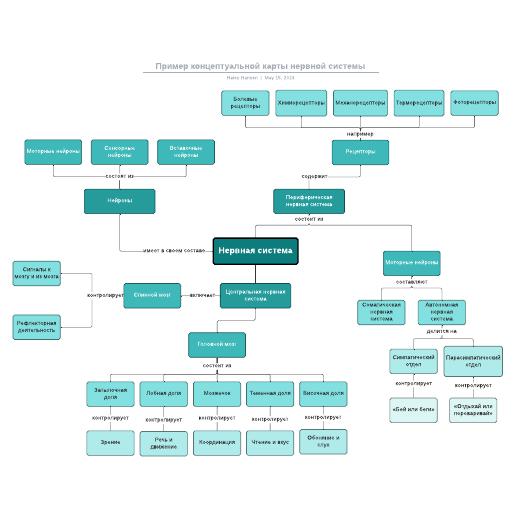 Пример концептуальной карты нервной системы