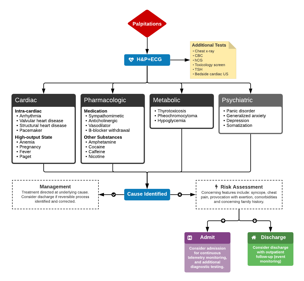 Algorithm for the Evaluation and Management of Palpitations