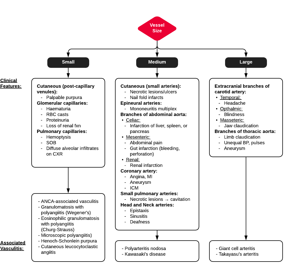 A System for Vasculitidies