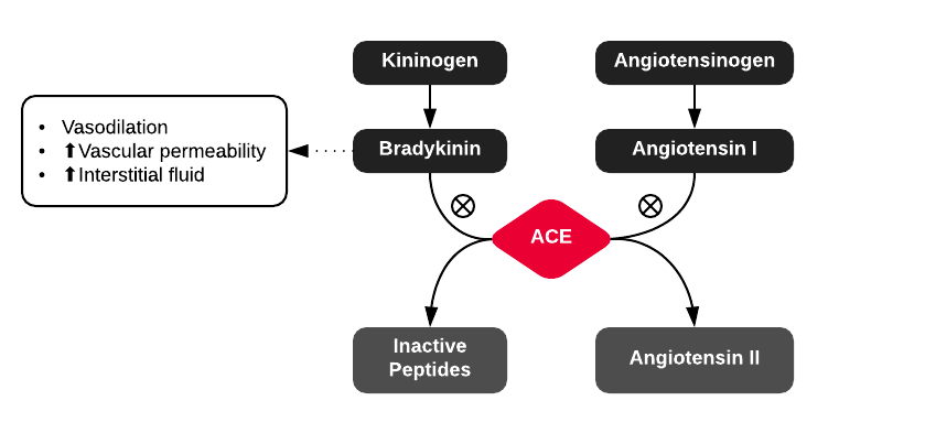 Pathophysiology of ACE-inhibitor induced angioedema