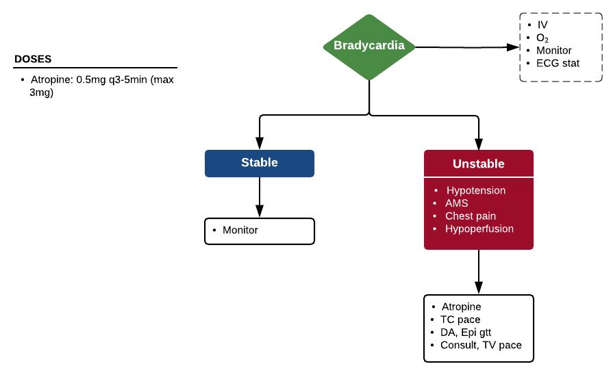 ACLS Bradycardia Algorithm