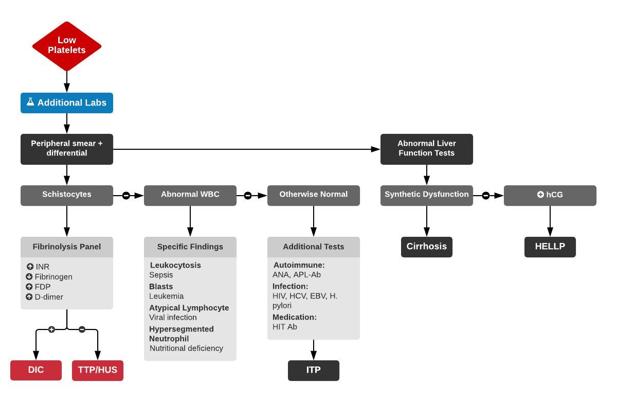 Algorithm for the Evaluation of Thrombocytopenia