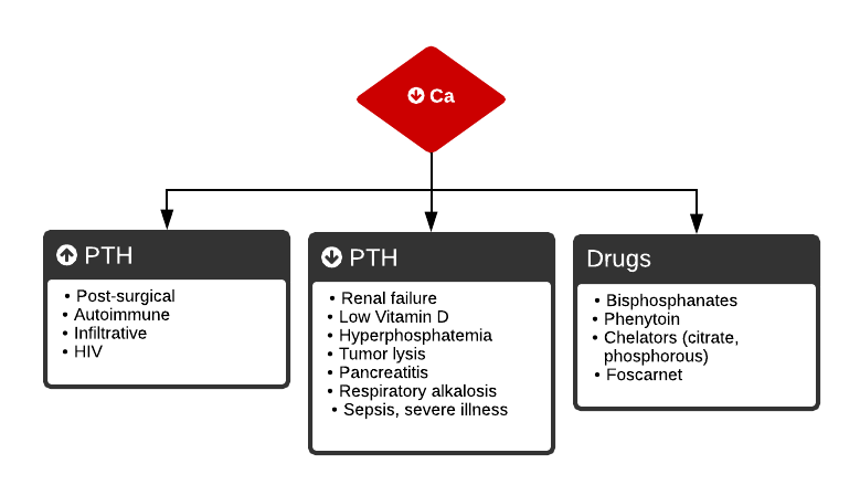 Algorithm for the Evaluation of Hypocalcemia