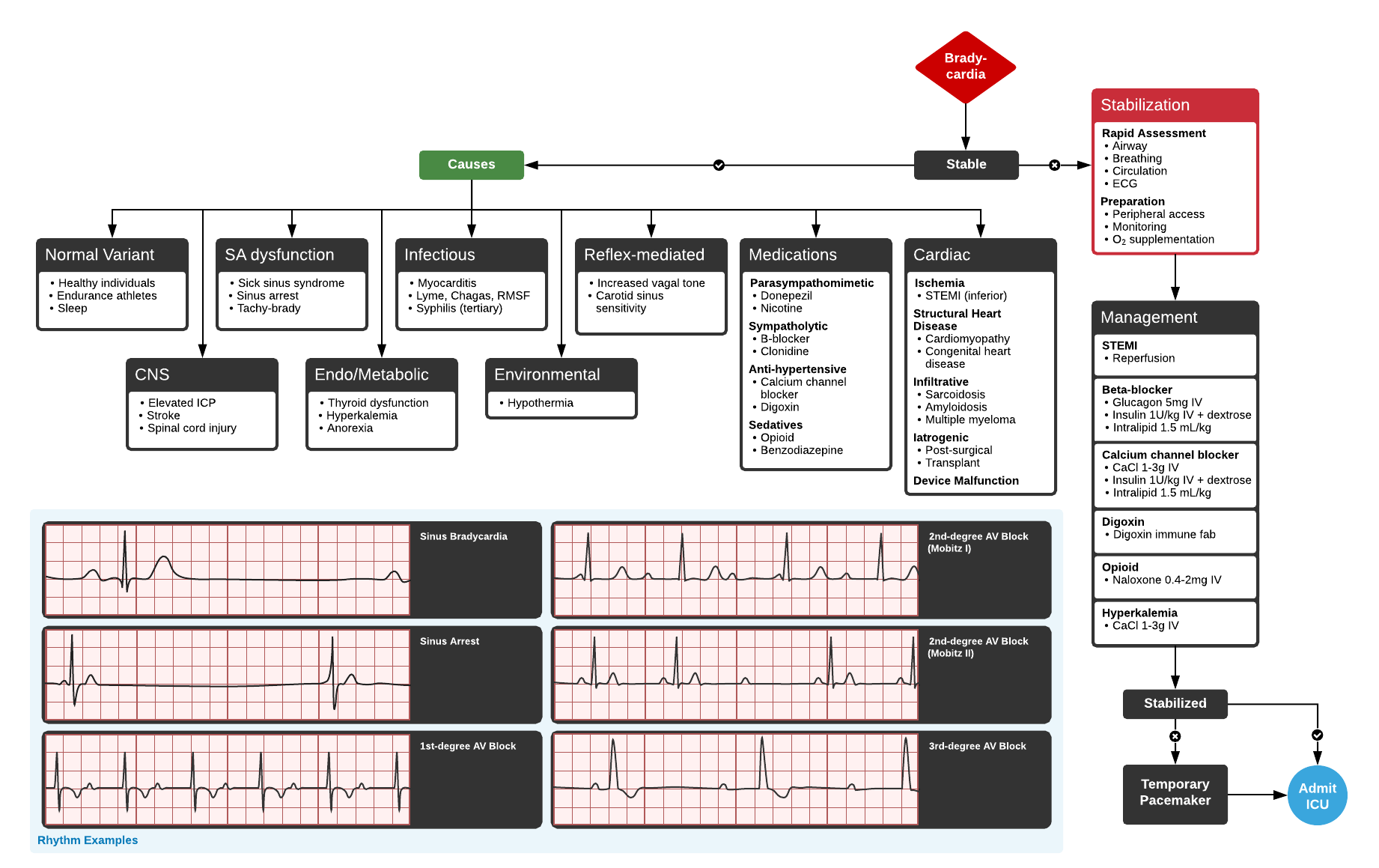 Algorithm for the evaluation and management of bradycardia