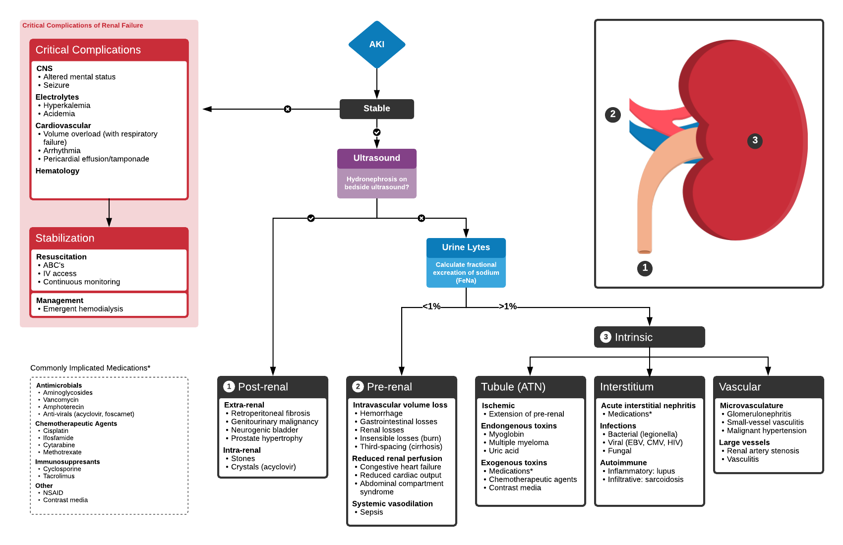 Algorithm for the Evaluation of Acute Kidney Injury